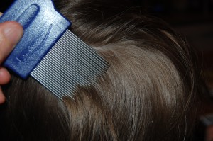 lice-comb-in-childs-head-of-hair